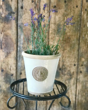 Kew Garden Long Tom Pots in IVORY ......3 SIZES