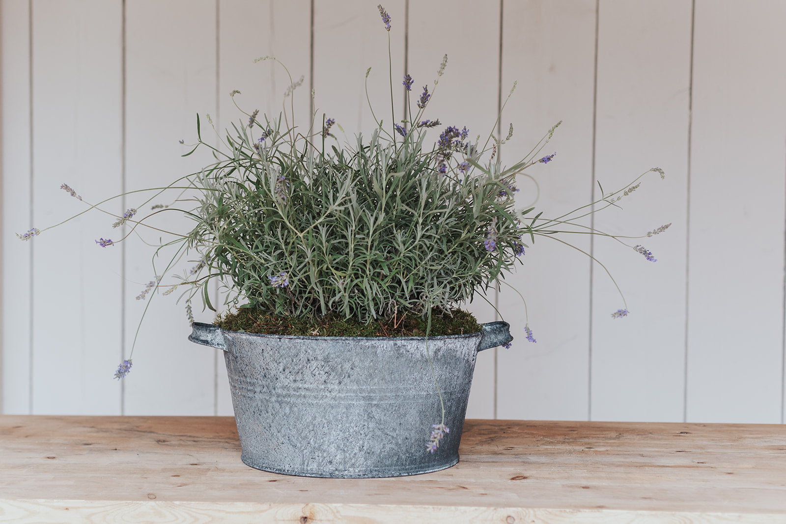 The French Zinc Bowl in 3 SIZES