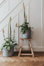The French Zinc Planter in 3 SIZES