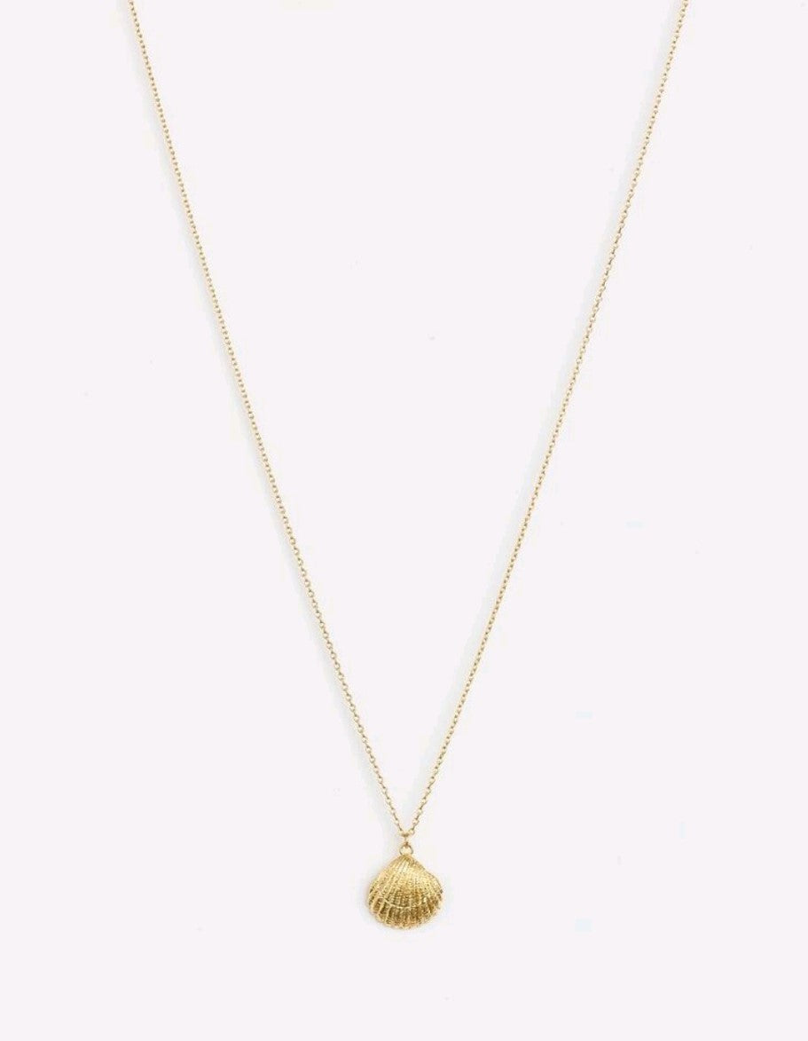Stella & Gemma Gold Cockle Shell Necklace