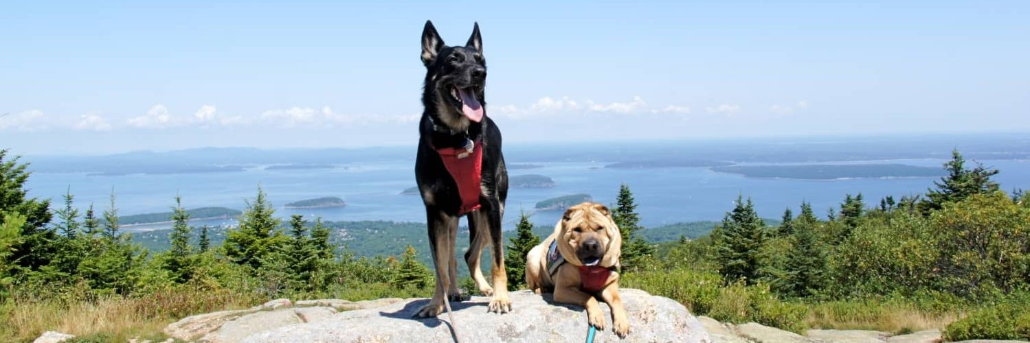 5 Open National Parks: Where to Take Your Dog