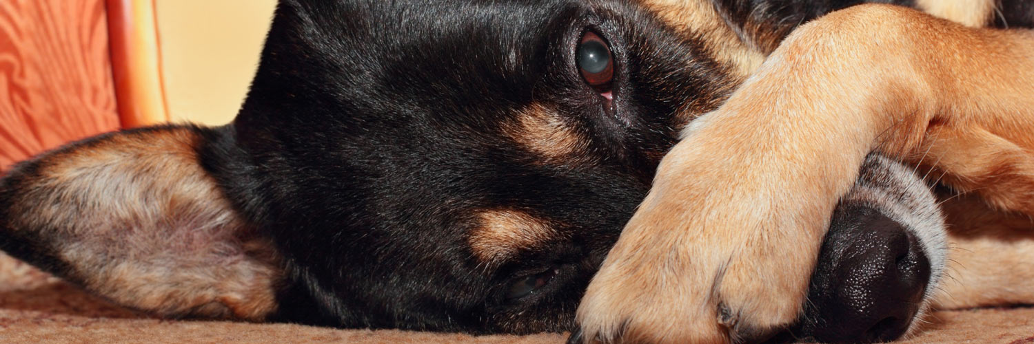 This is Why Your Dog is Gassy