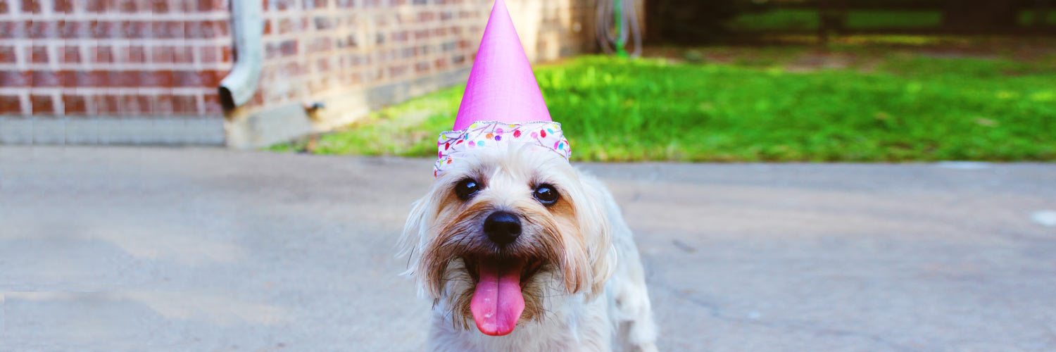 Pet Holidays To Celebrate All Year