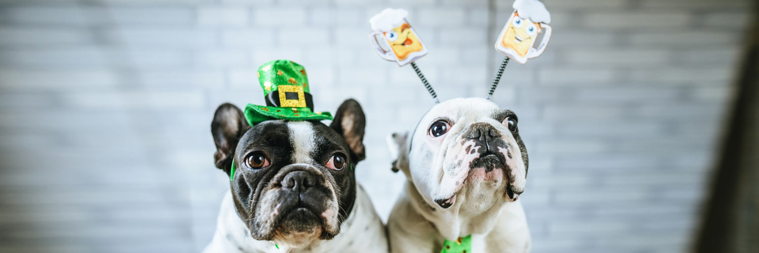 5 Must-Have St. Patty's Day Dog Accessories