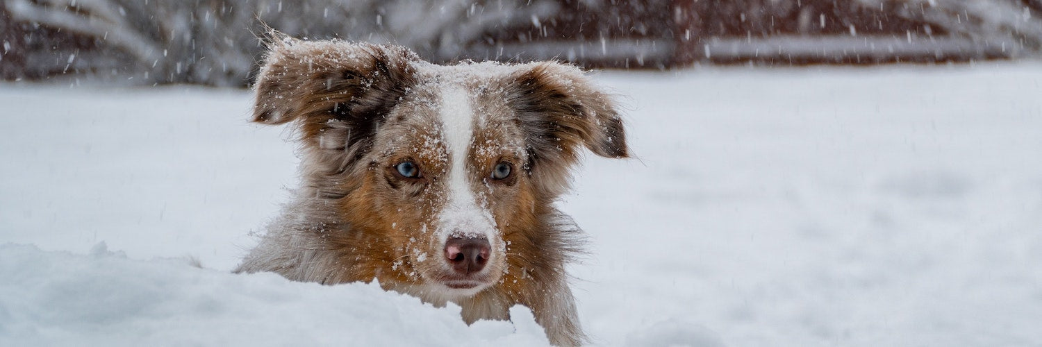Winter Woes - Treating Your Dog's Itchy Skin