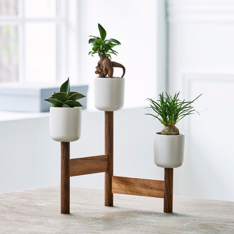 Up potter stander easycare plants