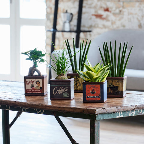 Easycare-plants in coffee pots by Feldborg