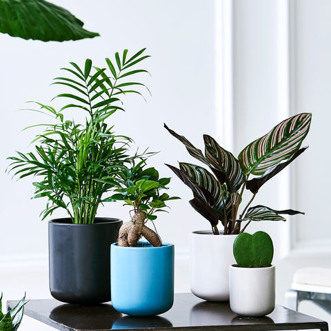 Up pots by feldborg planter