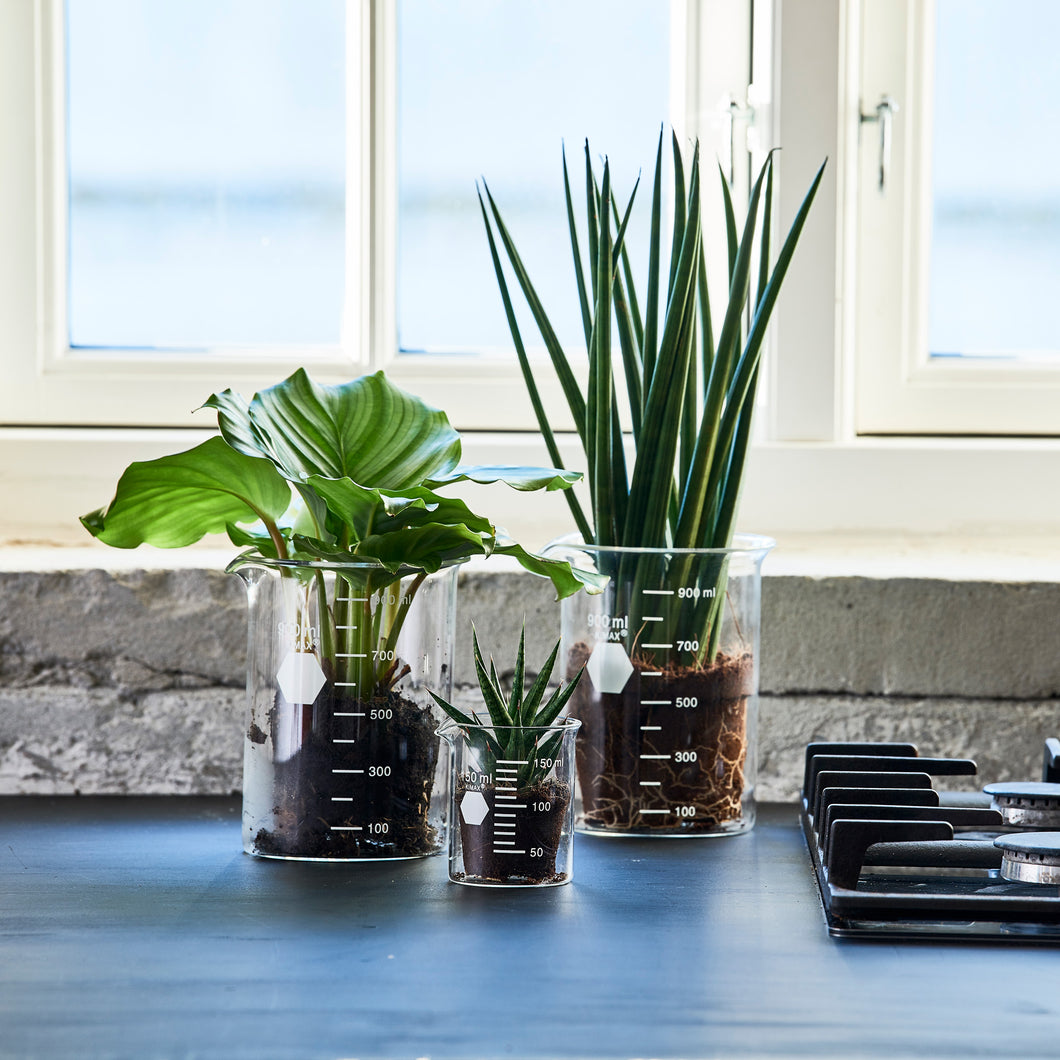 Laboratorieglas med planter