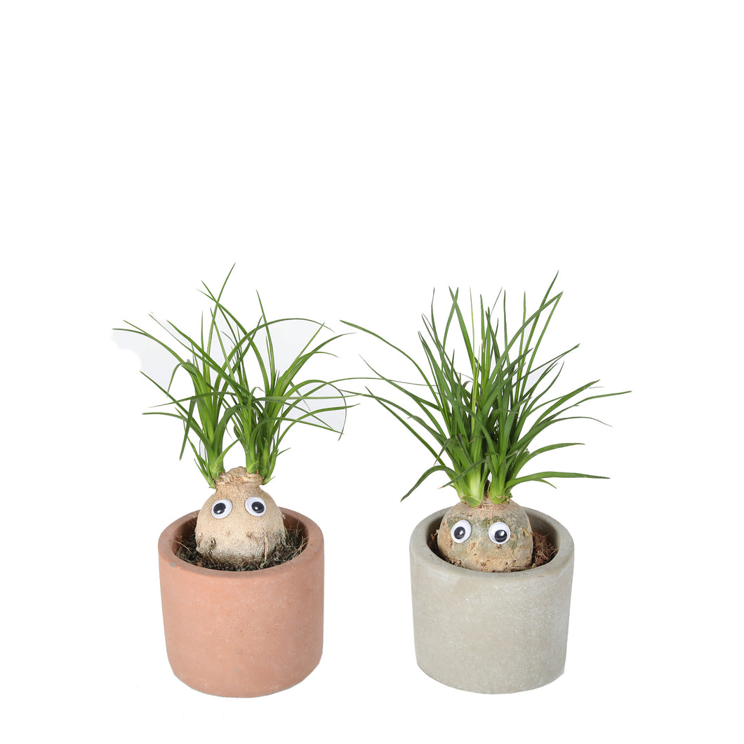 Cute Elephants Foot plant-freind til for kids room