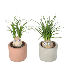 Load image into Gallery, Cute Elephants Foot plant-freind til for kids room
