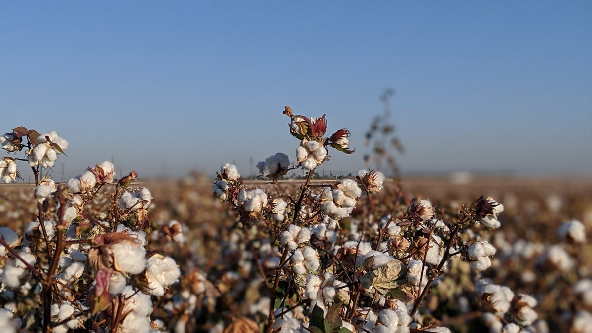 Is it really Egyptian Cotton in your bedding? The truth about Egyptian Cotton.