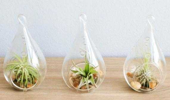 AIRY TEARDROP TERRARIUMS WITH AIR PLANTS & RIVER STONES - Feather & Quill Boutique