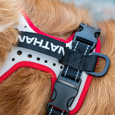 Closeup Shot of Nathan K9 White-Red Dog Harness with Black accents on Dog - no leash