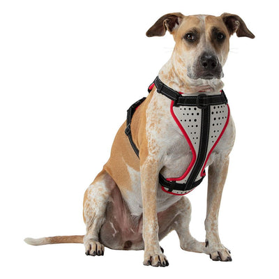 Large Boxer Staffordshire Bull Terrier Doberman Shepard Dog Mix/Mutt Wearing Nathan K9 White-Red Dog Harness with Black Accents - Front Angle View