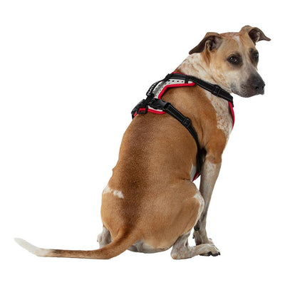 Large Boxer Staffordshire Bull Terrier Doberman Shepard Dog Mix/Mutt Wearing Nathan K9 White-Red Dog Harness with Black Accents - Back Angle View