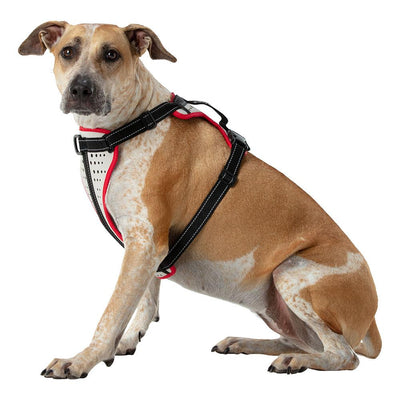 Large Boxer Staffordshire Bull Terrier Doberman Shepard Dog Mix/Mutt Wearing Nathan K9 White-Red Dog Harness with Black Accents - Left Angle View
