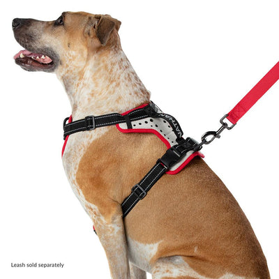 Large Boxer Staffordshire Bull Terrier Doberman Shepard Dog Mix/Mutt Wearing Nathan K9 White-Red Dog Harness with Black Accents - Left Angle View with Dog Leash Attached