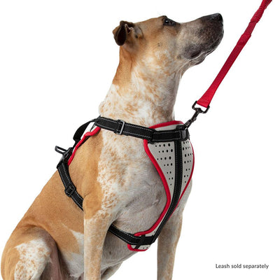 Large Boxer Staffordshire Bull Terrier Doberman Shepard Dog Mix/Mutt Wearing Nathan K9 White-Red Dog Harness with Black Accents - Right Angle View