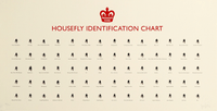 Housefly Identification Chart