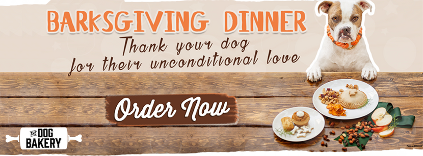 Recipes for a Safe & Healthy Thanksgiving Dinner for Your Dog