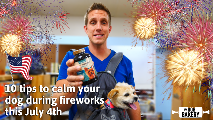 10 tips to calm your dog during fireworks this July 4th