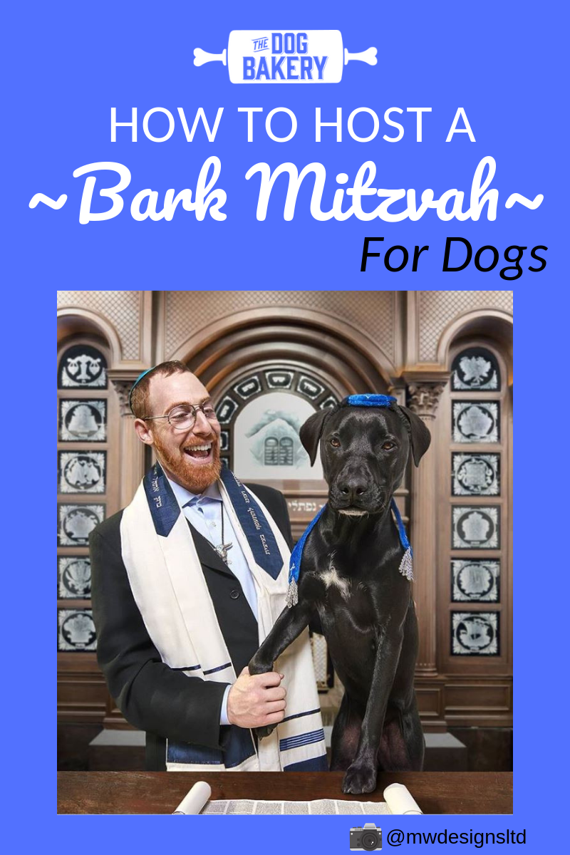 How To Throw Your Dog a Bark Mitzvah