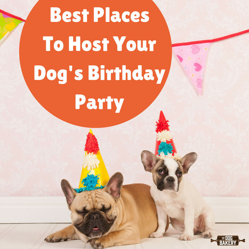 Best Places To Host Your Dog's Birthday Party
