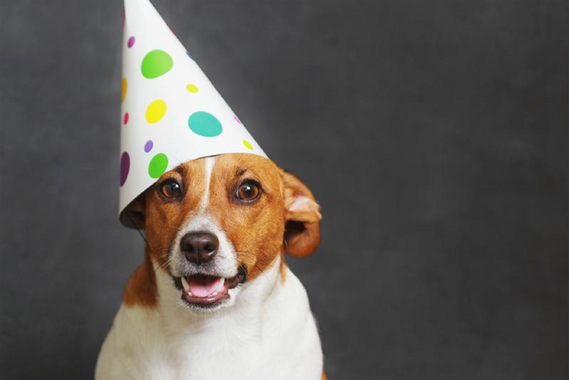 10 Dog Breeds That Love To Party