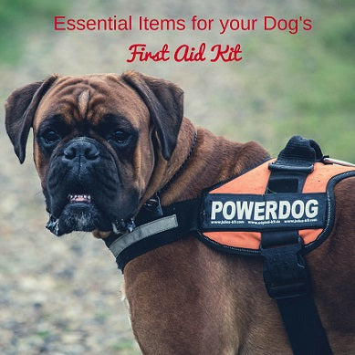 Essential Items for your Dog's First Aid Kit