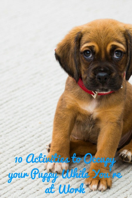 10 Activities to Occupy your Puppy While You're at Work
