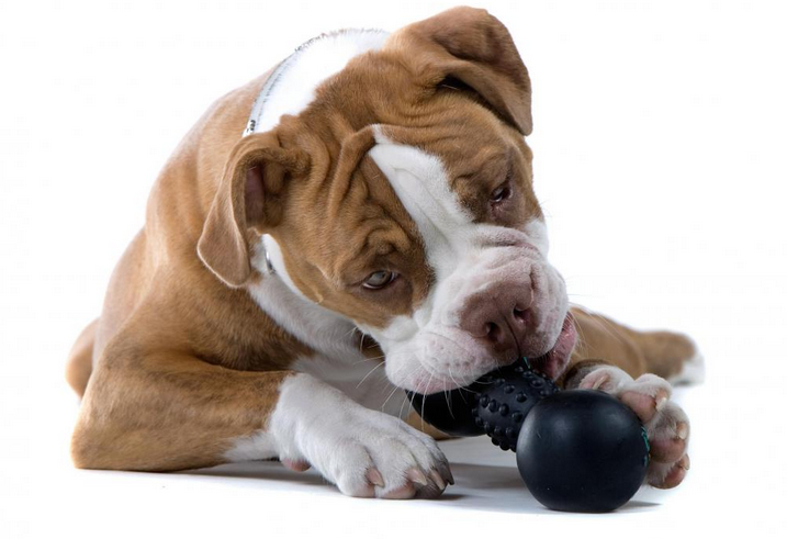 Stop Your Puppy From Chewing On Your Shoes (And Everything Else Too)