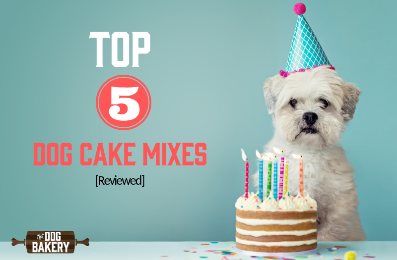 Top 5 Dog Cake Mixes Reviewed ⭐️⭐️⭐️⭐️⭐️