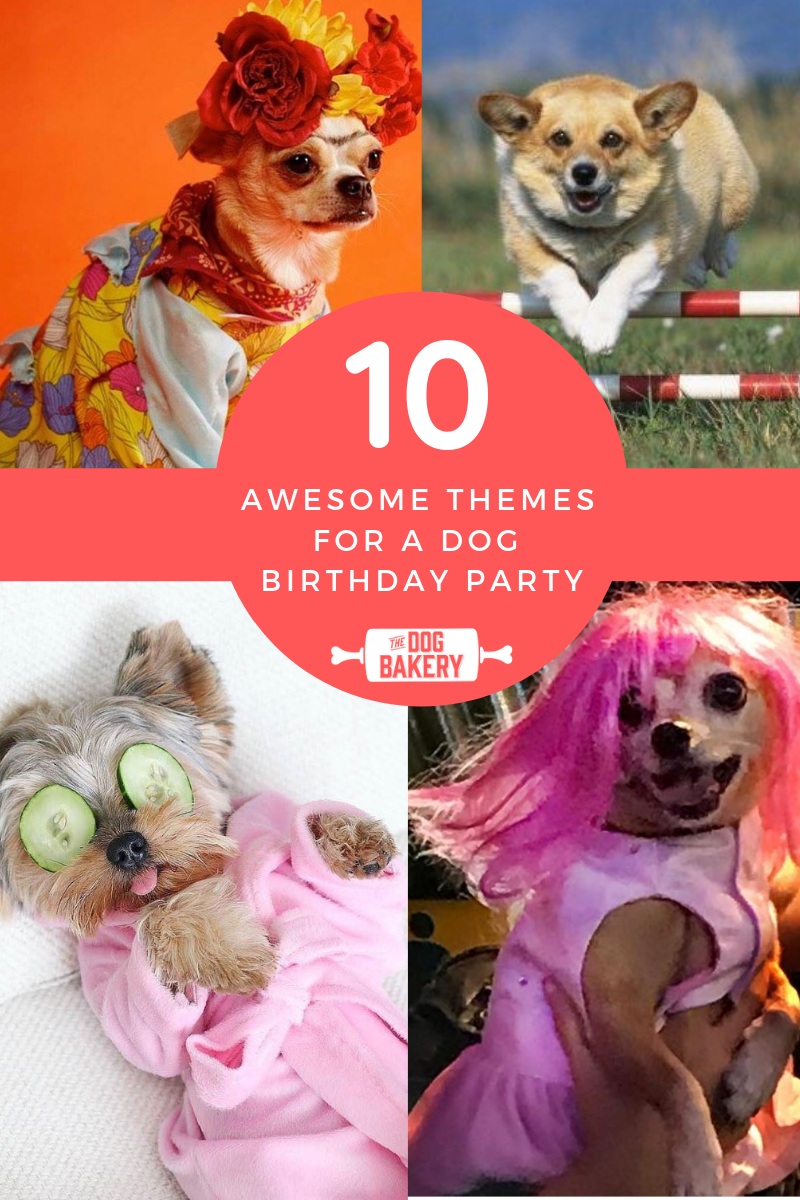 10 Awesome Themes For A Dog Birthday Party