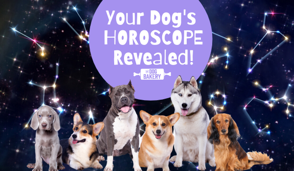 Your Dog's July Horoscope