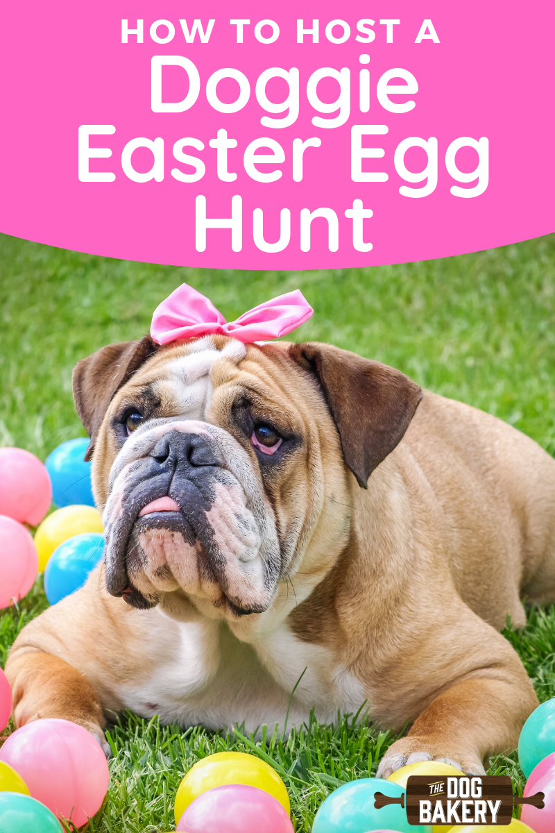 How to Host a Doggie Easter Egg Hunt