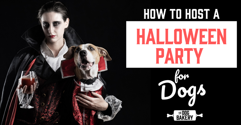 How To Host A Halloween Party For Dogs