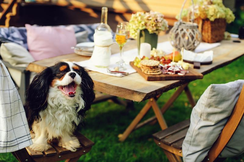 3 Dog Party Ideas for Spring Weather