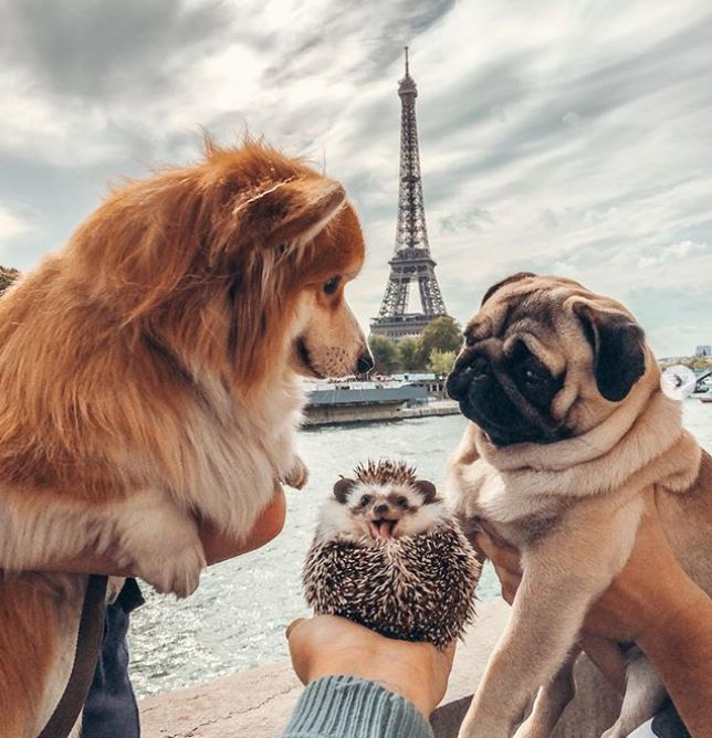 Decoding the success of #Instafamous pets (and how you can learn from it)