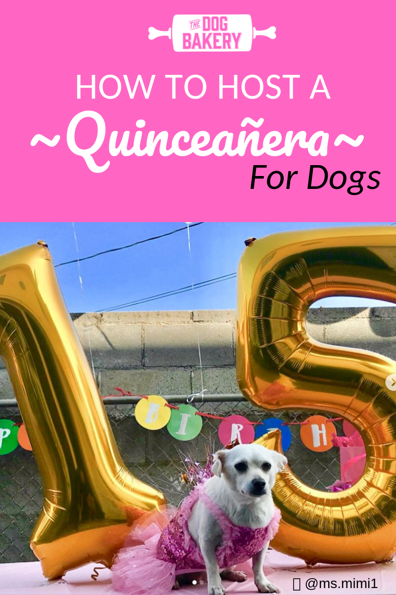 How to host a Doggie Quinceañera