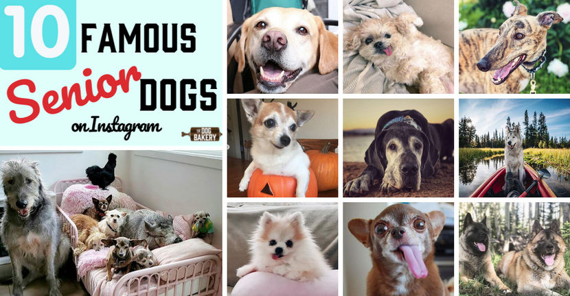 10 Really Famous Senior Dogs On Instagram