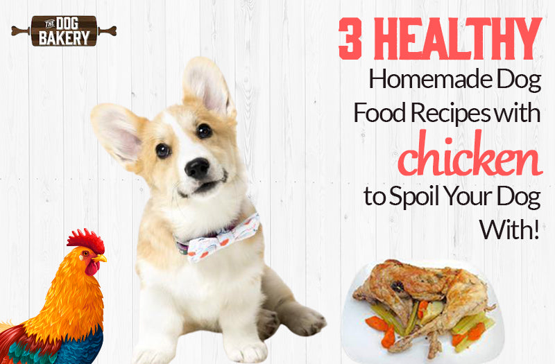 Homemade Dog Food Recipes With Chicken