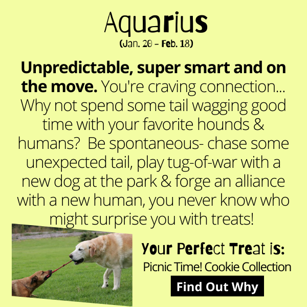 Unpredictable, super smart and on the move. You're craving connection... Why not spend some tail wagging good time with your favorite hounds & humans?  Be spontaneous- chase some unexpected tail, play tug-of-war with a new dog at the park & forge an alliance with a new human, you never know who might surprise you with treats!