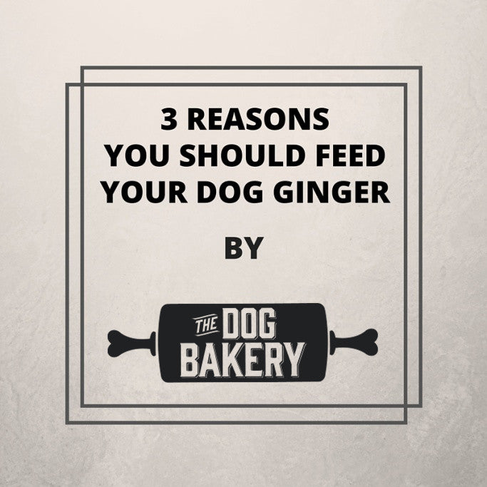 3 REASONS YOU SHOULD FEED YOUR DOG GINGER BY THE DOG BAKERY