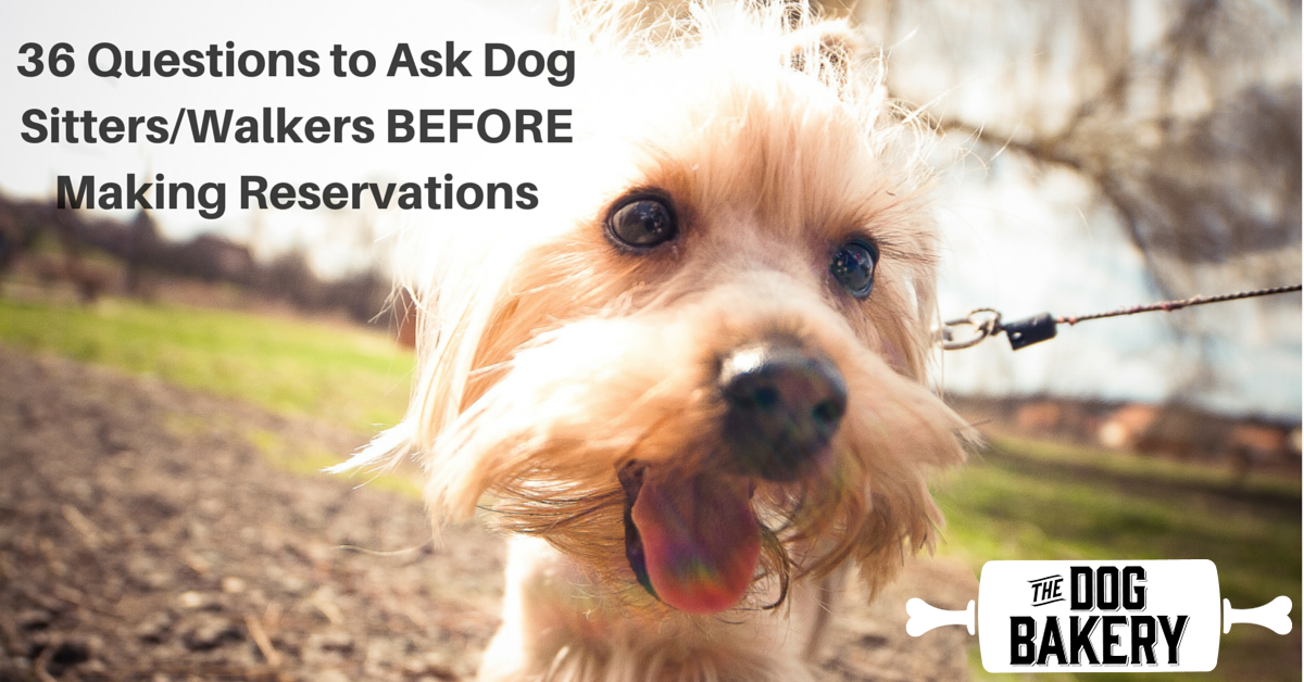 36 questions for dog walker
