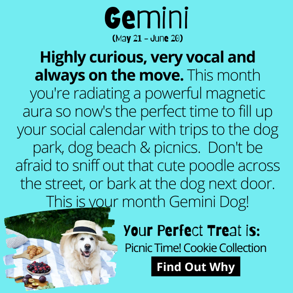 Highly curious, very vocal and always on the move. This month you're radiating a powerful magnetic aura so now's the perfect time to fill up your social calendar with trips to the dog park, dog beach & picnics. Don't be afraid to sniff out that cute poodle across the street, or bark at the dog next door. This is your month Gemini Dog!