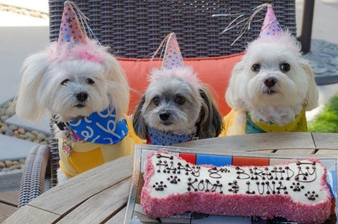 Dog Birthday Party Hats