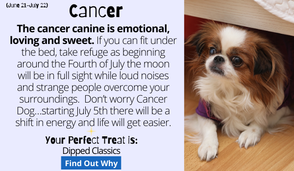 The cancer canine is emotional, loving and sweet.  If you can fit under the bed, take refuge as beginning around the Fourth of July the moon will be in full sight while loud noises and strange people overcome your surroundings.   Don't worry Cancer Dog…starting July 5th there will be a shift in energy and life will get easier.