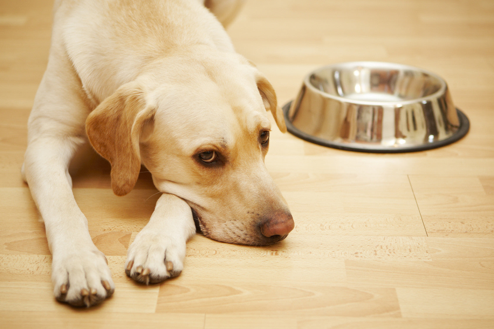 5 Signs Your Dog May Be Allergic To Grains Best Grain Free Dog