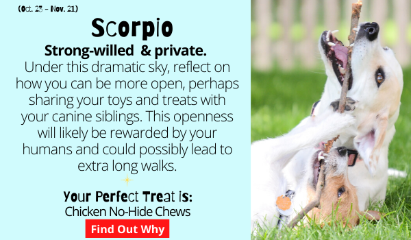 The Scorpio Dog is strong-willed, mysterious and prefers to keep things private.  Under this dramatic sky, reflect on how you can be more open, perhaps letting your canine siblings play with your toys and sharing your treats. This openness will likely be rewarded by your humans and could possibly lead to extra long walks.  Your Perfect Treat: Chicken No-Hide Chews. Find out why